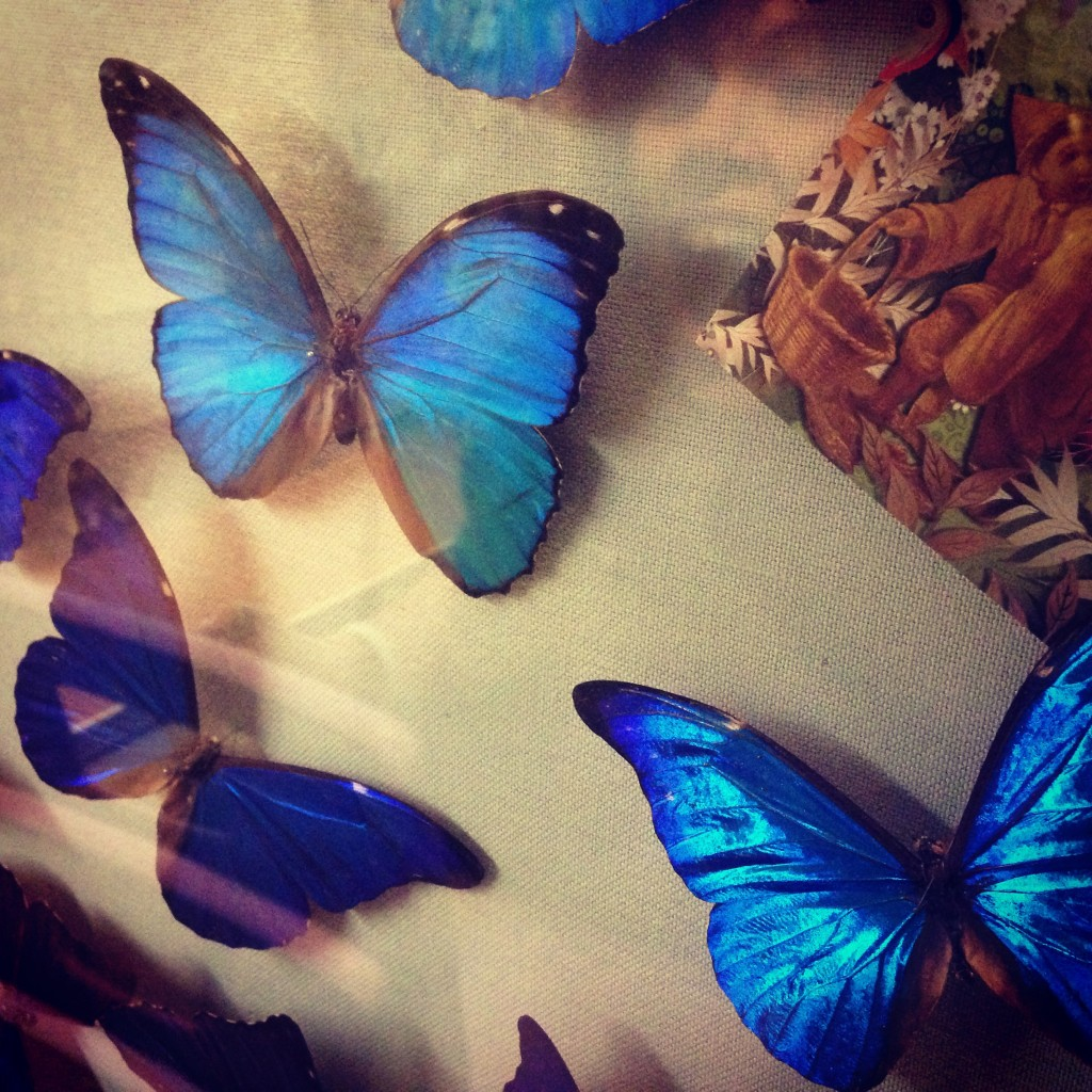 colour inspiration morpho butterflies