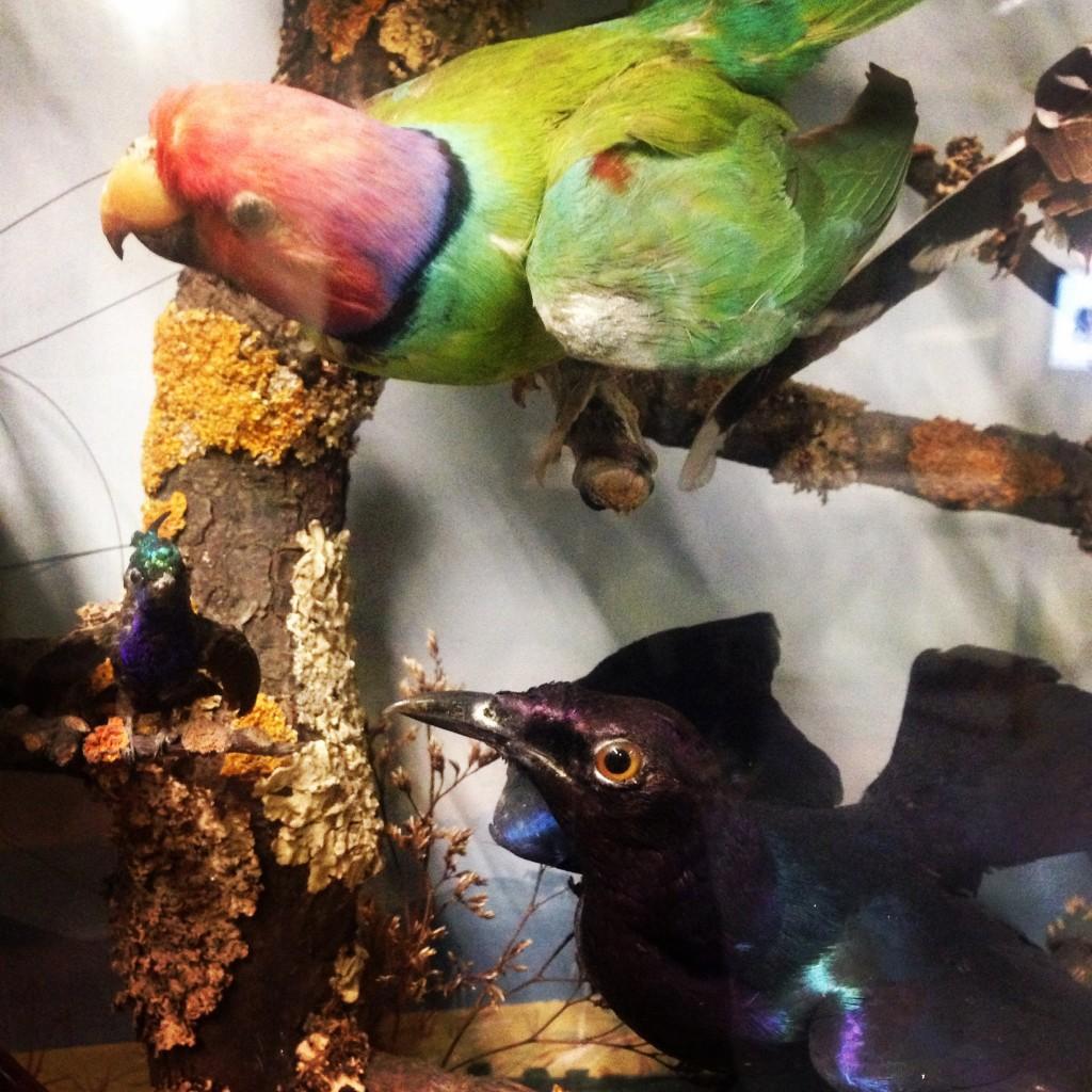 colour inspiration tropical birds